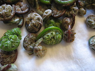 Fiddleheads......Yum